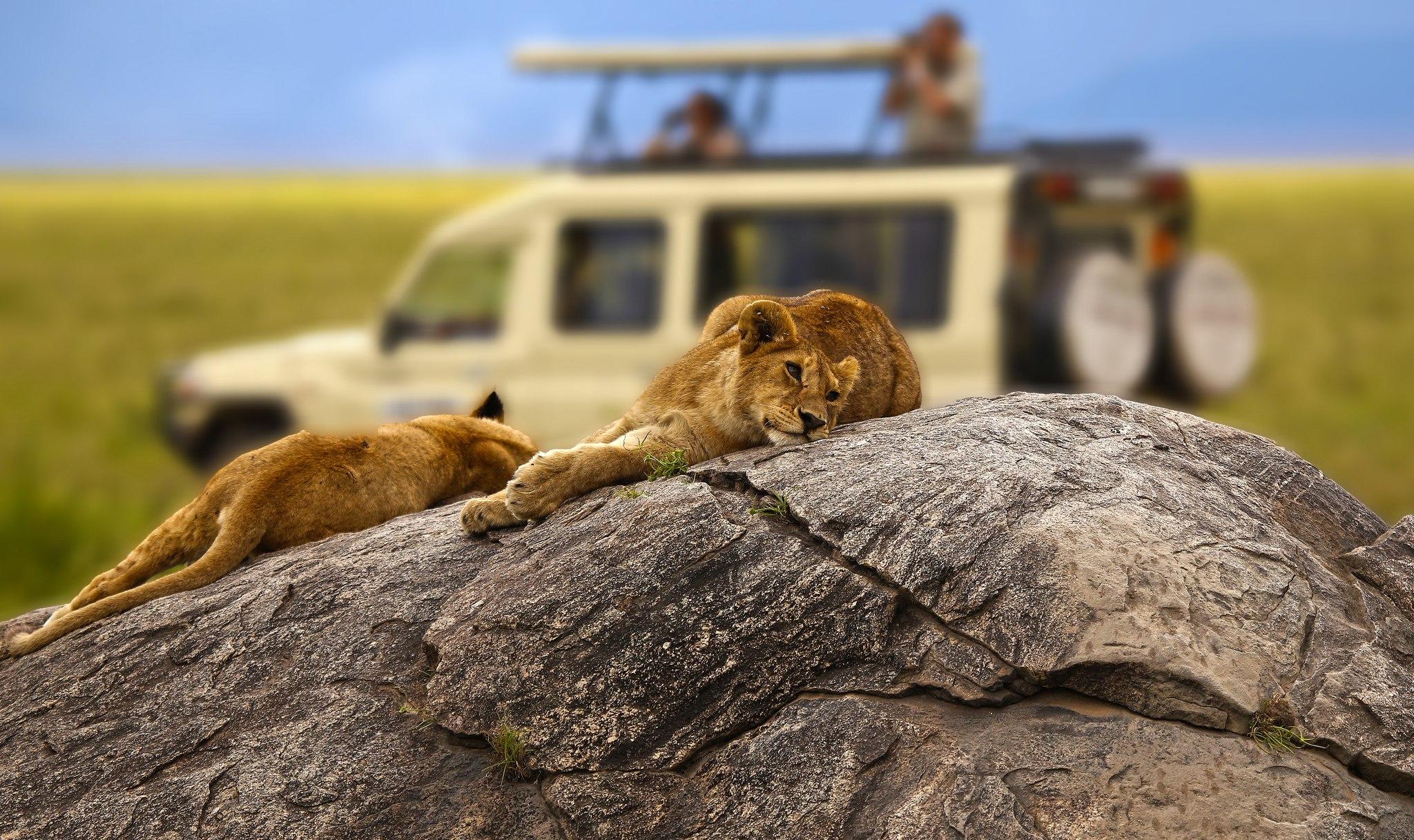 отлично отдохнуть во время тура в Танзании